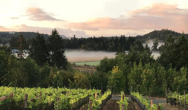 Blue Grouse Vineyards